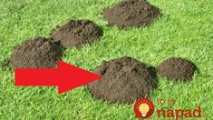 Mole Control - Keeping Your Lawn And Garden Beautiful Gardening For Beginners, Gardening Tips, Gardening Books, Mole Repellent, Lawn And Garden, Home And Garden, Quick Garden, Taupe, Plantation