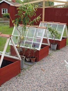 Vanhat ikkunat kasvihuoneena
