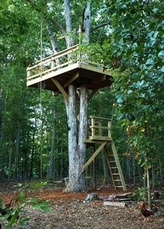 Building a tree perch, tree deck or treehouse is a DIY backyard project that will delight children. Kids get excited when play with friends on a wooden deck on a tree. The tree perch will become their.