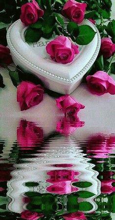 Romantic Love Photos, Beautiful Love Images, Good Night Love Images, Love Heart Images, Beautiful Flowers Wallpapers, Beautiful Rose Flowers, Love Flowers, Rose Flower Wallpaper, Flowers Gif