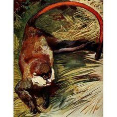 The Uganda Protectorate 1902 White-nosed Cercopithecus monkey of Uganda Canvas Art - Sir Harry Johnston (18 x 24)