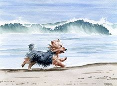 """Yorkshire Terrier at the Beach"" Dog Art Print Signed by Artist DJ Rogers David J. Rogers Fine Art http://www.amazon.com/dp/B0037ZCMRE/ref=cm_sw_r_pi_dp_.mIKtb1761383CE6"
