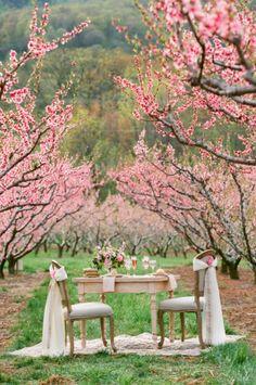 Southern Cherry Blossom Wedding Ideas | photography by http://www.jenfariello.com