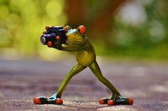Fotógrafo, Sapo, Engraçado, Verde