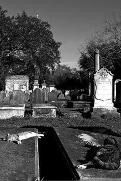 Spooktober Special: Cats Hanging Out In Graveyards Cemetery Monuments, Cemetery Statues, Pet Cemetery, Cemetery Headstones, Old Cemeteries, Graveyards, Gardens Of Stone, Catacombs, Around The Worlds