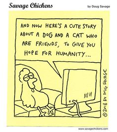 A Cute Story Savage Chickens, Chicken Jokes, Cute Stories, Intp, Cartoons, The Creator, Smile, Comics, Funny