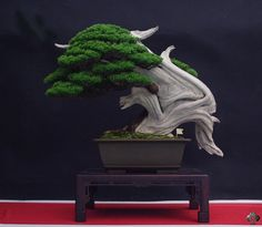 Bonsai Empire