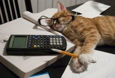 The mathematics of cats.