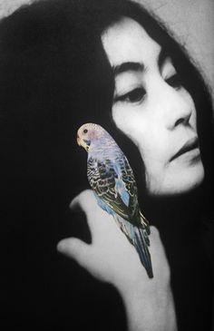 Yoko 1, Emilie Halpern, 2010