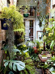 Urban Garden Design David Whitworth — The Design Files Small Courtyard Gardens, Small Courtyards, Back Gardens, Small Gardens, Indoor Courtyard, City Gardens, Small Cottage Garden Ideas, Small Garden Design, Garden Cottage