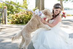 This happy wedding dog with flower collar and leash with ribbons goes in for as hug on the bride's Summer wedding day at the Sagamore | wedding dogs