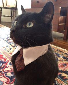 Cat Nervous About Job Interview
