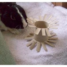Make Your Own Homemade Rabbit Toys