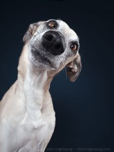Anybody in for a kiss? - All my pictures here can be licensed. Just send a message to info@elkevogelsang.com