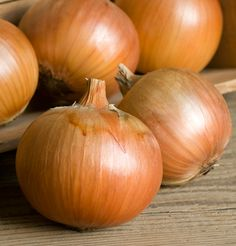 Patterson f1 |. Extremely long storage onion (Johnnys seeds)