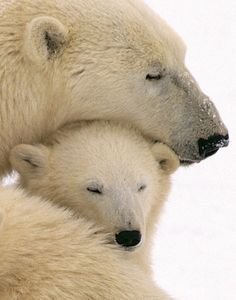 Nap ... by and with mom!