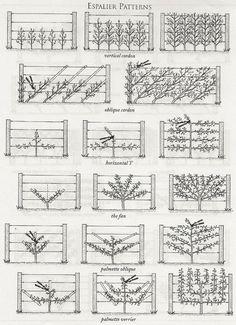 Espalier it's a system of growing dwarf fruit trees on espaliers where they ar. Espalier it's a sy Potager Garden, Veg Garden, Garden Trellis, Fruit Garden, Garden Care, Edible Garden, Garden Plants, Garden Landscaping, Rose Trellis
