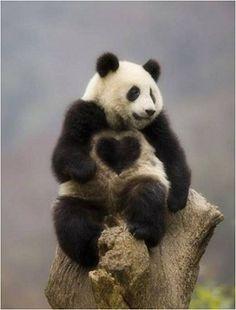 パンダ 画像加工ではないらしい