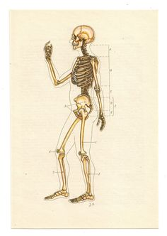 2 Vintage Anatomical Prints skull skeleton by FromEuropeWithLove, $5.90