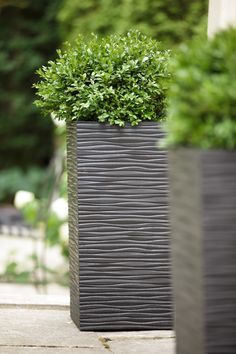 As warm weather is upon us, planning is on our minds! Soft, calm lines of Serenity planter paired with a simple shrub create minimalist zen for your backyard oasis. Boxwood Shrub, Rubber Material, Recycled Rubber, Timeless Design, Warm Weather, Shrubs, Oasis, Serenity, Garden Design