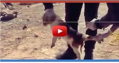 We demand the cessation of condemnation and extermination of dogs, stop,using cruel methods.