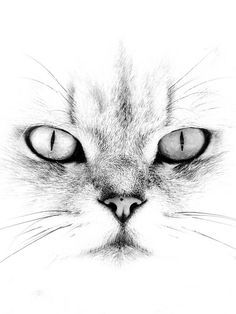 A Whiter Shade of Pale - - Tiere Malen Katze - Katzen Pencil Art Drawings, Art Drawings Sketches, Cat Drawing, Painting & Drawing, Drawing Ideas, Shading Drawing, Drawing Faces, Cross Drawing, Drawing Step