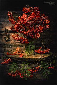 deep orange berries and wood