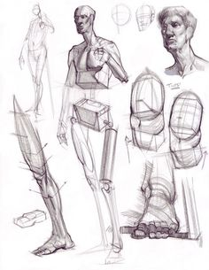 Anatomy ✤ || CHARACTER DESIGN REFERENCES | キャラクターデザイン • Find more at https://www.facebook.com/CharacterDesignReferences if you're looking for: #lineart #art #character #design #illustration #expressions #best #animation #drawing #archive #library #reference #anatomy #traditional #sketch #development #artist #pose #settei #gestures #how #to #tutorial #comics #conceptart #modelsheet #cartoon || ✤