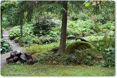 Mökkipuutarhassa: Utuinen puutarha