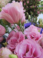 pink lisianthus - this is just gorgeous!