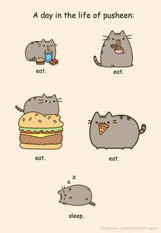 Pusheen the Cat. A Day in the Life of Pusheen. By Artist Unknown. Gato Pusheen, Pusheen Love, Nyan Cat, Pusheen Stormy, Catsu The Cat, Chat Kawaii, Cute Kawaii Drawings, Cat Drawing, Cat Memes