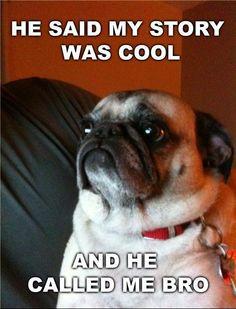 Cool story, pug