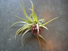 Personal Flowers by Dragonfly Floral  #dragonflyfloral #boutonniere