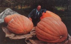 Howard Dill sits in a patch of Atlantic Giants, the variety he developed in the 1960s.  All prize-winning giant pumpkins originated with his Atlantic Giant seeds. The world record is currently a 2009-pounder propagated in 2012 by Ron Wallace of Rhode Island.