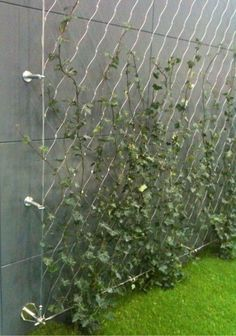 * DIY green wall using tensioned mesh and stainless steel fixings * DIY grüne Wand unter Verwendung Garden Arbor, Garden Trellis, Garden Landscaping, Privacy Trellis, Landscaping Ideas, Wisteria Trellis, Florida Landscaping, Herbs Garden, Fruit Garden