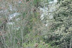Dogwoods closer up