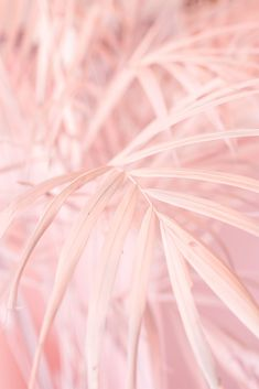 Museum of ice cream party - pink palm tree leaves - palmeira de folha rosa Palm Tree Plant, Palm Tree Leaves, Trees To Plant, Plant Leaves, Pastel Pink, Pastel Colors, Pink Color, Colours, Pastel Wallpaper