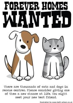 Forever Homes Wanted  #animal #rescue #pets catsbeaversandducks: Illustration by ©DoodleCats - Beth Wilson