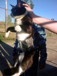 Cat detained on clandestine mission at Russia prison