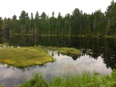 The Mizzy Lake Trail in Algonquin Park. One of the best places to spot a moose! What Is Forest, Camping Images, Algonquin Park, Forest Bathing, Beautiful Park, Over The Years, Moose, The Good Place, Natural Beauty