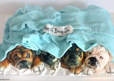 What is the Green Bean Dog Diet? Pug Cake, Bulldog Cake, My Pet Dog, Realistic Cakes, Unique Birthday Cakes, Gravity Cake, Cool Cake Designs, Cakes Today, Sculpted Cakes