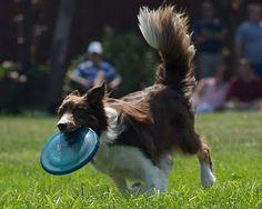http://casacalado-eng.blogspot.jp/2010/01/dog-frisbee.html