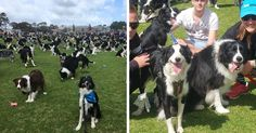Events At Some Nps Sites Which Allow Pets To Join In The Fun