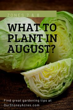 Planting in August will allow you to have a yummy crops into the fall and early winter! #backyardgardening #gardening #vegetablegardening