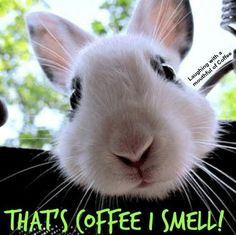 St Pats, I Love Coffee, Haha, Cute, Animals, Easter, Holiday Ideas, Spring, Laughing