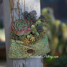 Nice succulent arrangement and pot by Donna Davis Taylor