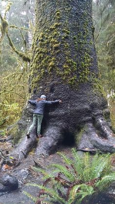 Andrea the Tree Hugger during a Twilight Tour we explored Hoh Rainforest near Forks, WA. Perfectly Rainy Day That's me! Spreading the love all around the world. www.noveladventuresvacations.com