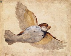 "renaissance-art: "" Giovanni da Udine c. Study of a Flying Sparrow "" Renaissance Kunst, Italian Renaissance, Fear Of Flying, Galerie D'art, Bird Art, Art Reproductions, Beautiful Birds, Simply Beautiful, Canvas Art Prints"