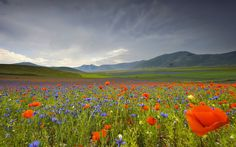 Italy landscape flowers poppies cornflowers mountains meadow wallpaper | 2048x1280 | 125240 | WallpaperUP