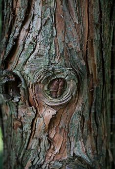 Tree Bark Texture - Tree bark texture closeup, green and brown color Natural Forms Gcse, Natural Form Art, Natural Texture, Texture Photography, Tree Photography, Wood Bark, Elements And Principles, Forest Creatures, A Level Art